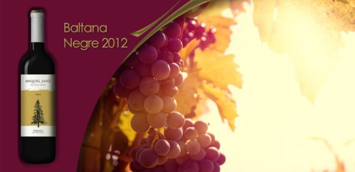 Selección de vinos del Penedés